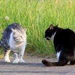 Две кошки ссорятся